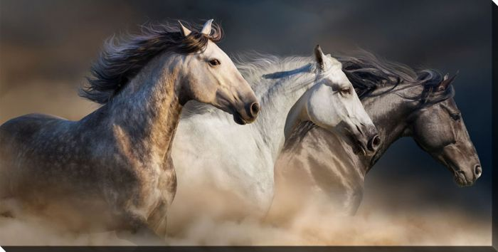 Gallop In The Dust