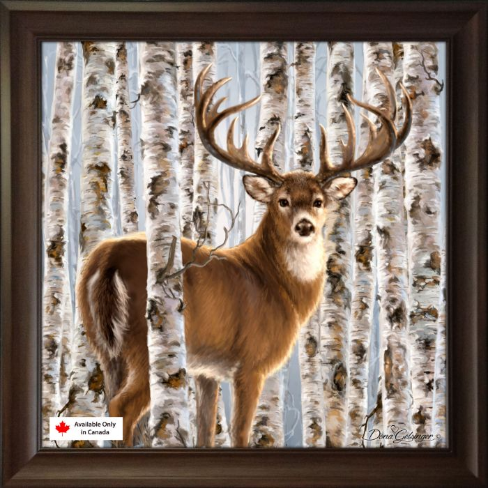 Birch Whitetail